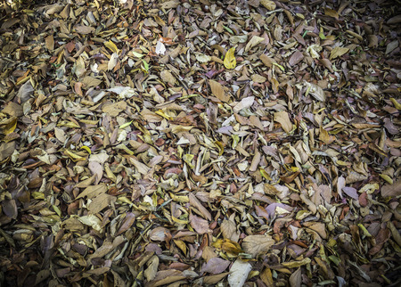 Closeup pattern and texture of dry leaves Stock Photo