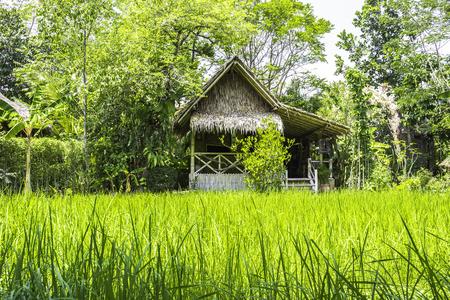 Thai farmer hut in green rice field Stock Photo