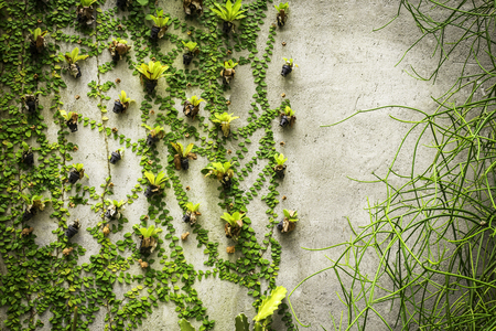 Closeup green plants on concrete wall background