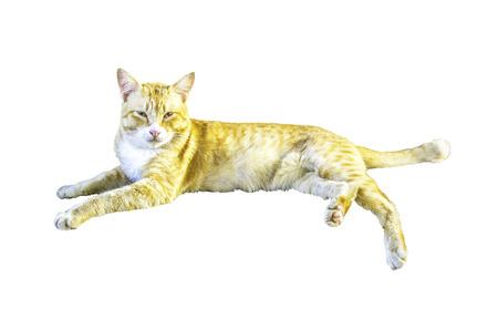 Cat isolated on white background Stock Photo