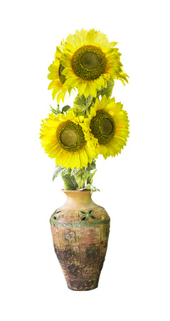 Sunflower in vase isolated on white background Stock Photo