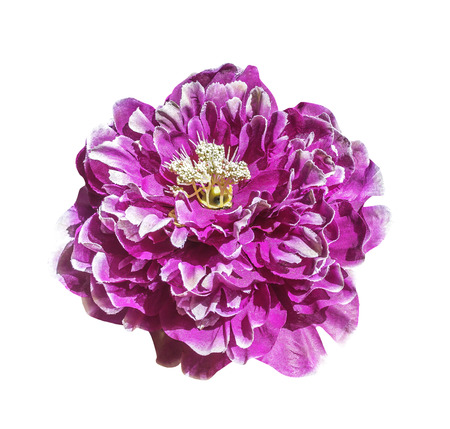 Magenta artificial flower isolated on white with clipping path Stock Photo