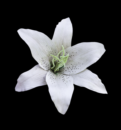 White artificial flower isolated on black with clipping path