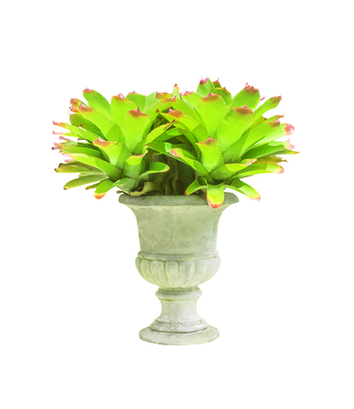 Bromeliad in concrete pot isolated on white with clipping path Stock Photo