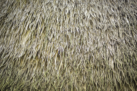 Texture and pattern of grasses thatch roof Stock Photo