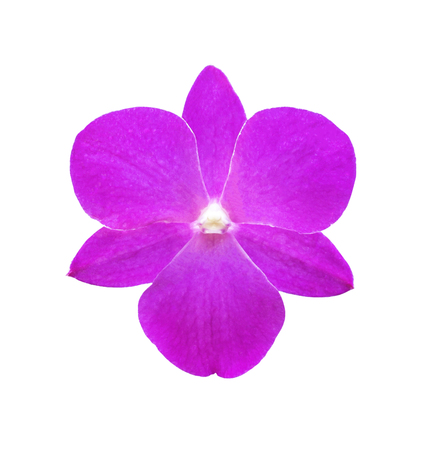 Single pink orchid flower isolated on white with clipping path