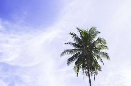 Coconut tree with blue sky and fluffy clouds