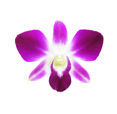 Single magenta orchid flower isolated on white with clipping path Stock Photo