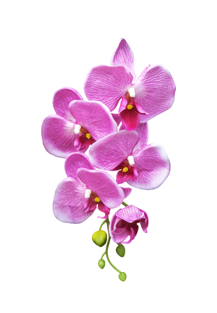 Pink artificial orchid flower isolated on white background Stock Photo