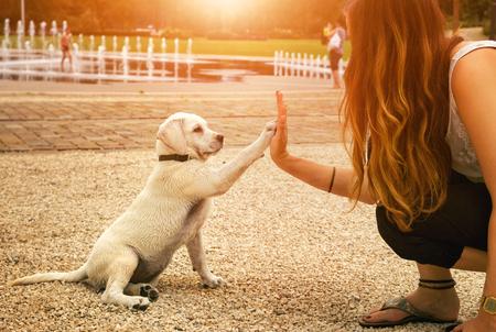 apretón de manos entre la mujer y el perro - High Five - el trabajo en equipo entre el perro chica Foto de archivo