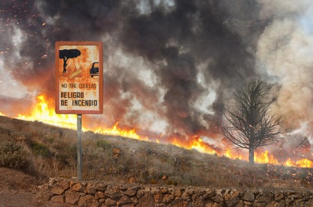 informs: forest fire and a warning sign that informs about the danger of cigarettes in the nature