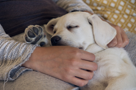 witty: Sleeping dog puppy is tired and dreams sweet