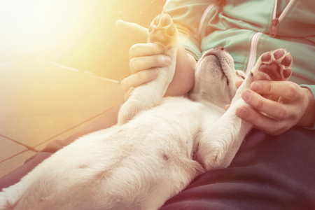 paws: cute little dog puppy cuddles and shows paws very pretty Stock Photo