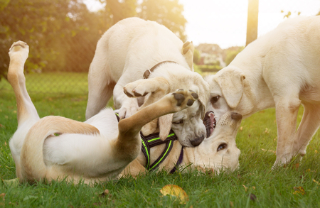 Dog School: some dogs play together - puppies in the dog school