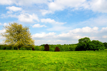 green meadows: Green Meadows in the Park. Blue Sky with Fluffy Clouds in England