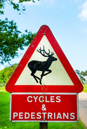 ciclos: Signos de alerta en carretera - Ciervo, Ciclos y peatones Foto de archivo