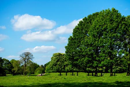 oak trees: Green Landscape in the Park with Blue Sky