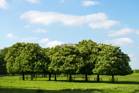 l agriculture: Green Landscape with Blue Sky in the Park