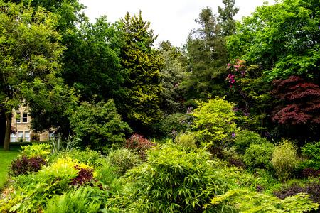 english garden: Beautiful English Garden in Summer, England, UK Stock Photo