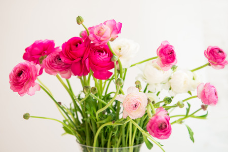 persian buttercup: Bouquet of colorful persian buttercup flowers ranunculus, shallow DOF, selective focus Stock Photo