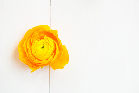 persian buttercup: Yellow persian buttercup flowers ranunculus on wooden background. Copy space, your text here Stock Photo