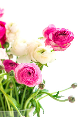 persian buttercup: Bouquet of colorful persian buttercup flowers ranunculus, shallow DOF, selective focus, isolated