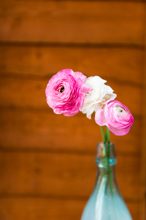 persian buttercup: Colorful persian buttercup flowers ranunculus on Brown Wooden Rustic Background Stock Photo