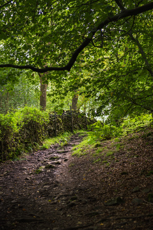 cumbria: Path in the Woods to follow to the Orrest Head Viewpoint, Windermere, Cumbria, UK
