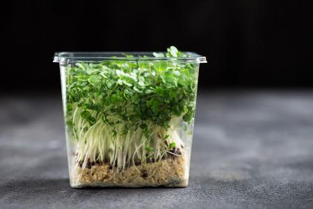 cress: Fresh Cress Salad on Plastic Container on Dark Background