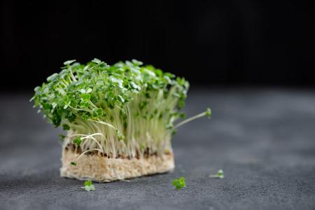 cress: Fresh Cress Salad Macro Shot Selective Focus, Shallow DOF