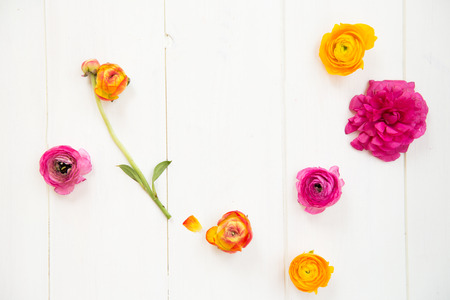 Ranunculus Heads on White Background, Top View, Text for Space Stock Photo