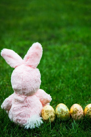 hapy: Easter Bunny and Golden Easter Eggs on green Grass Background, Space for Text