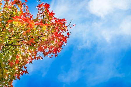 Paesaggio autunnale Foglie variopinte dell'albero di autunno sulla priorità bassa del cielo. Parco inglese