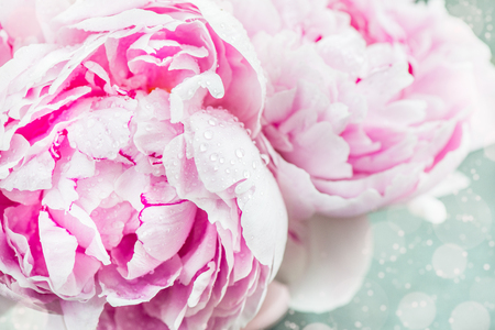 Fresh bunch of pink peonies on light background. Card Concept, copy space for text Stockfoto