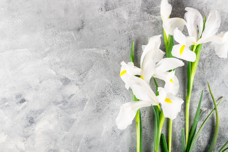 Beautiful Iris Flowers on Grey Background, Top View, Copy Space