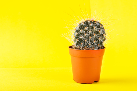 Tiny Cactus in the Pot on Bright Background. Conceptual image, Creative Minimalism, trendy neon colors, art gallery design Stock Photo