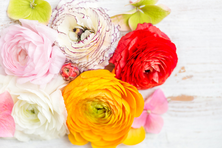 Ranunculus Buttercup Flowers of different colours, Frame from heads of flowers, Spring or Mothers Day Concept, space for text, top view