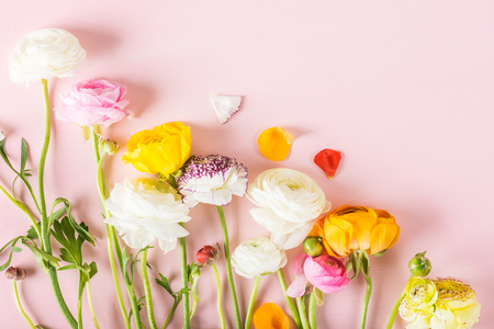 Close up of Ranunculus Buttercup Flowers of different colours, Spring or Mothers Day Concept, space for text