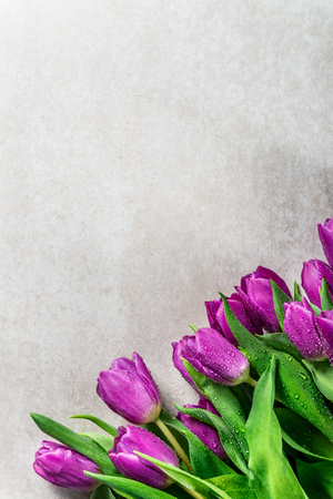 Beautiful purple tulips on grey background, copy space, flatlay