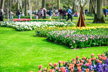 One of the world's largest flower gardens in Lisse, the Netherlands. Close up of blooming flowerbeds of tulips, hyacinths, narcissus