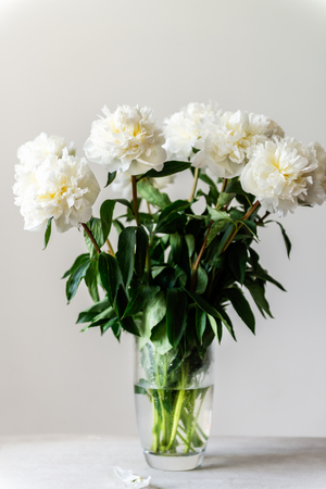 Bunch of amazing peonies in the vase on white wall background Stock Photo