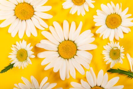 Floral camomile pattern on bright yellow background, top view, flat lay