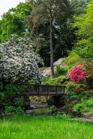 Piękny ogród z kwitnącymi drzewami wiosną, Walia, Wielka Brytania Zdjęcie Seryjne