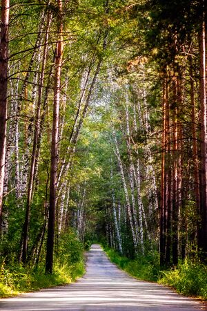 Beautiful summer forest with different trees, natural peaceful scene with old road