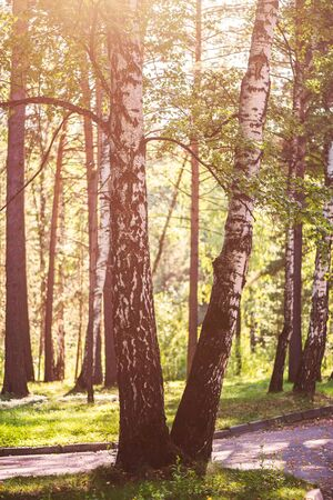 Beautiful summer forest with different trees, natural peaceful scene