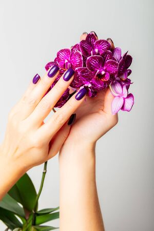 Stylish trendy purple female manicure. Woman hands are holding orchid flowers 写真素材 - 133623568