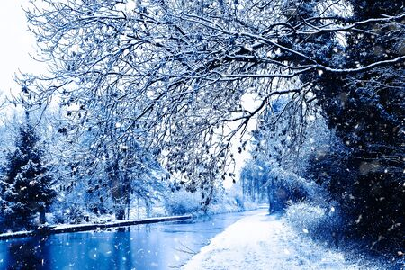 Snowing in England, UK, beautiful winter walk along the alley in the forest, toned in blue color Banque d'images - 135489837