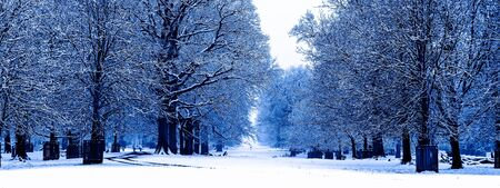 Snowing in England, UK, beautiful winter walk along the alley in the forest, toned in blue color, banner size Banque d'images - 135489838