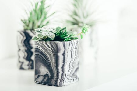 Beautiful tiny succulent plants in the marbled geometric succulent planters on white shelf against white wall. Lifestyle home decoration Stok Fotoğraf