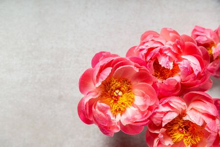Amazing pink peonies on light background. Card Concept, copy space for text Reklamní fotografie